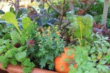 bountiful-garden-pics